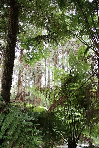 Tree Ferns and Stringybarks