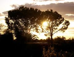 puesta de sol (Ricardo Acosta Jr.) Tags: b sol k de t j sevilla y o d g c w n s x m h v f r e u l p z q puesta acosta  a i ricardito