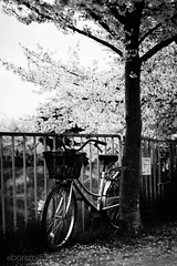 spring collection. (Boris Meyer) Tags: park light blackandwhite bw white black blur 20d love beautiful bike japan photoshop canon dark outside 50mm photo spring flickr noir alone dof graphic bokeh style nb days sakura nippon osaka 2008 kansai effect blanc japon ef50mmf18ii japaneseculture kansaidays  flickrcom  bwdreams niftyfifty astrazioniinbiancoenero borismeyer