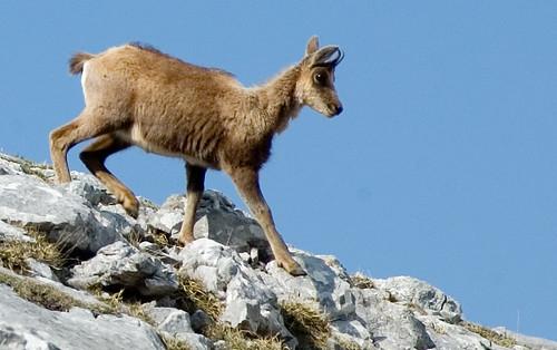 Parque nacional en los Picos de Europa