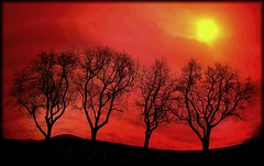 DREAMING TREES (Weirena) Tags: trees red art love nature nikon colours searchthebest spirit fantasy dreams soe breathtaking themoulinrouge blueribbonwinner firstquality fineartphotos golddragon mywinners abigfave platinumphoto anawesomeshot frhwofavs citrit theunforgettablepictures betterthangood theperfectphotographer thegardenofzen goldstaraward ilovemypics qualitypixels magicdonkeysbest photoexel vision100