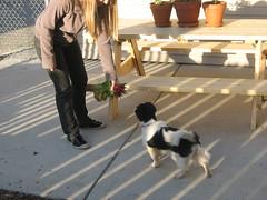 Learning to Appreciate Radishes (ktulson) Tags: dog bill radish