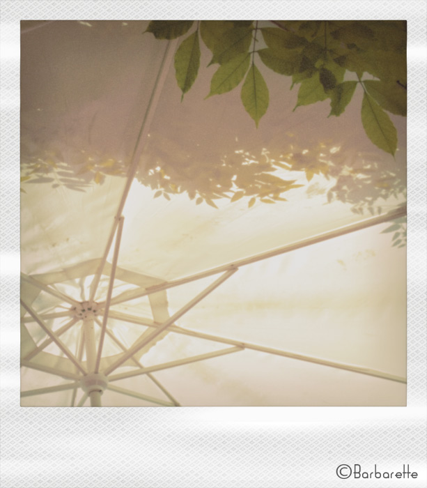 parasol-pola