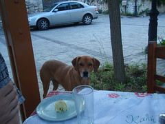 A friendly dog (steven_and_haley_bach) Tags: mystras fifthday mistras greecevacation