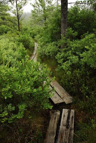The Boardwalk Ponemah Bog Style
