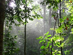 Sunlight Through Jungle Rain II (ighosts) Tags: friends rain river ilovenature adventure malaysia pahang tamannegara boatride leech jungletrekking canopywalk tropicaljungle