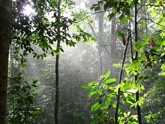 Sunlight Through Jungle Rain II (ighosts) Tags: friends rain river ilovenature adventure malaysia pahang tamannegara boatride leech jungletrekking canopywalk tropicaljungle
