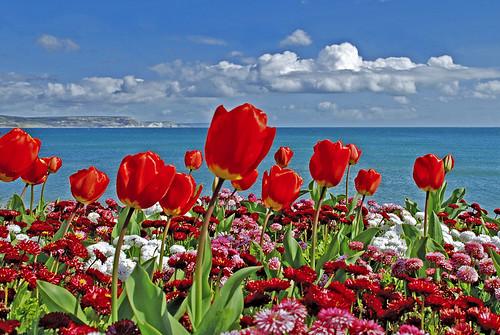 Thumb Excelente foto de tulipanes rojos