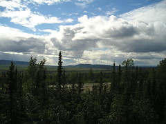 A view of sun, sky, and forest from the Arctic Circle.