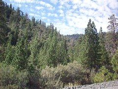 forest. (adrianna.) Tags: trees camp hiking