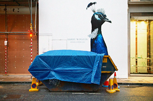 Matt Stuart's Blue Peacock