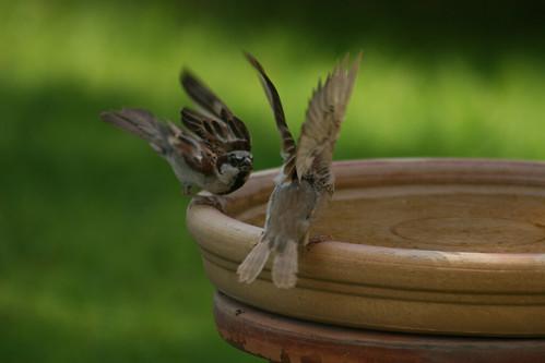 Bird Fight!