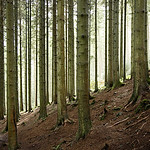 Grizedale Trees