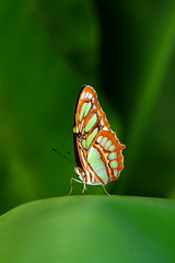 Your majesty - The butterfly (kees straver (will be back online soon friends)) Tags: flowers orange flower macro green nature amsterdam yellow closeup butterfly insect leaf bokeh butterflies artis majesty amazingcolors siproetas