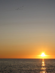 V-sign to the World (BigAlHale) Tags: sunset geese vsign seascap