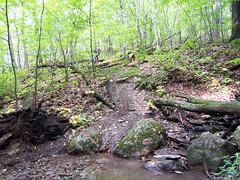 Triple log crossing, wet slimy descent, roots, rock, stream crossing check.