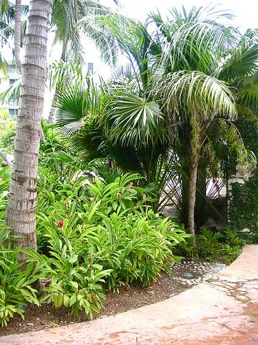 Jamaica 2008