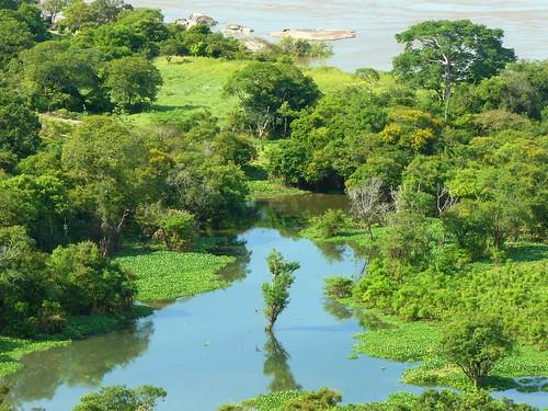La Selva Amazonica,  un Lugar Increible