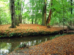 Beech Glade, Coombe Abbey