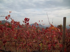 Colori d\\\'autunno (Santa Lucia, Veneto, Italy) Photo