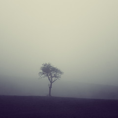 one (minarai) Tags: tree fog still silence single