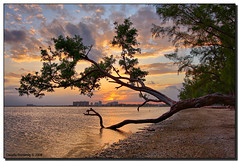 Back at My Tree (Fraggle Red) Tags: ocean sunset tree beach clouds florida jpeg hdr coconutgrove biscaynebay canonefs1022mmf3545usm naturesfinest rickenbackercauseway pinkishhue 3exp anawesomeshot miamidadeco dphdr thegreatshooter