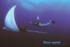 manta flight (Fiona Ayerst) Tags: sea ray underwater flight diving diver mimic manta mantaray largefish orcadivers