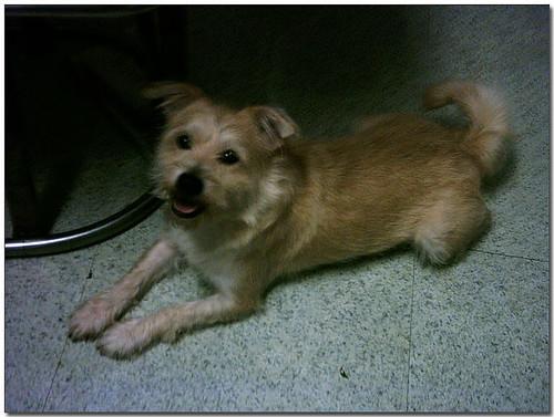 2008-11-13-『以認養代替購買,如有能力懇請給他們一個機會,謝謝您!』基隆一群愛心媽媽收養的狗喵,免錢再等你們認養喔~