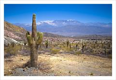 Sun and Snow in Argentina (craig_352) Tags: park parque cactus sun snow west southamerica argentina landscape amrica do north national nacional sul salta noa cachi argentino noroeste craig352 sudamrica loscardones rectadetintin rectadeltintin