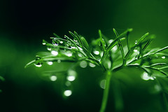 (Lee_Bryan) Tags: macro green bokeh 100mmf28 thankyousomuch hggt mostwelcomememe