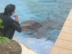 PIC_0105 (scubawatters) Tags: hawaii oahu blowhole sealifepark