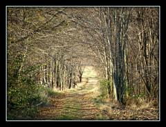 Farm Lane (Hammer51012) Tags: trees geotagged farm indiana olympus lane carrollcounty sp570uz