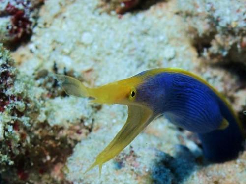 Ghost morey eel 3