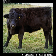 Defiance - Dictionary of Image (s0ulsurfing) Tags: light art nature look field grass animal animals illustration rural photoshop downs square island design graphicdesign countryside cow artwork cattle cows graphic natural image artisti