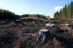 Clear cutting