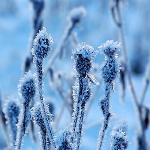 Ice.................3