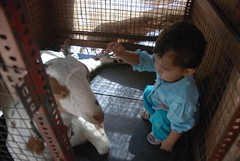Marziya and the Goats by firoze shakir photographerno1
