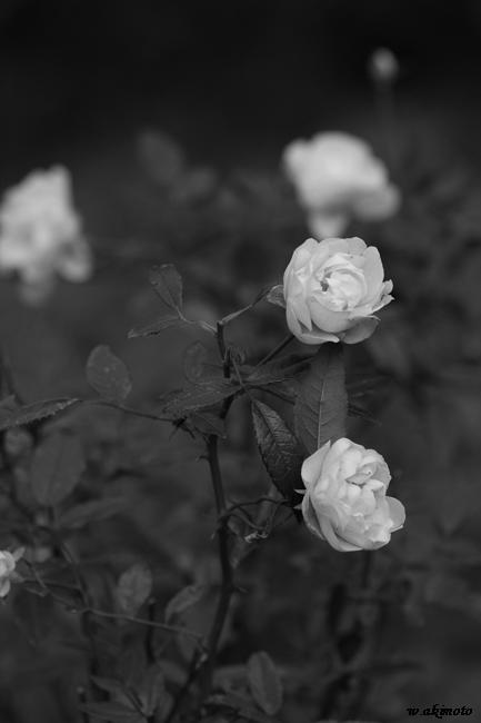 花写真 006 (EOS 40D)