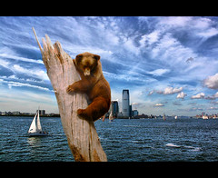 Grizzly on the Hudson (DP|Photography) Tags: jerseycity hudsonriver stranded museumofnaturalhistory grizzlybear fishoutofwater debashispradhan dpphotography dp|photography