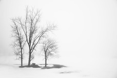 White Space (segamatic) Tags: park trees winter bw white mist snow cold nature silhouette fog canon landscape eos grey haze michigan bare branches gray silhouettes rochester negativespace lonely minimalism barren sparse austere ruleofthirds threeofakind bigmomma canonef24105mmf4lisusm challengeyouwinner photofaceoffwinner photofaceoffplatinum pfogold beautifulworldchallenges thechallengefactory 5dmarkii tmoacawardwinner 5dmkii herowinner