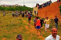 15-05-2011. Segundo encierro. Toros de la ganadería La Alpujarra