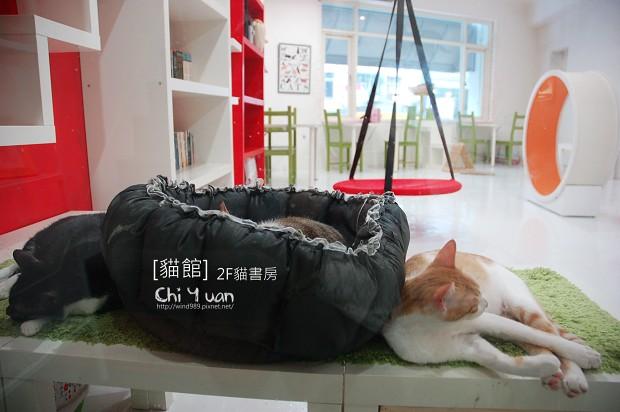 [台北]西區天水路,貓館,有貓的幸福(2F貓書房)