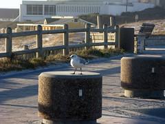 Blouberg Sunset (fuelspin) Tags: orange sun boat waves seagull windy son capetown skip tilt shining freight blouberg kaap branders sononder skepe golwe