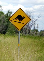 Beware of skiing kangaroos (tm-tm) Tags: sign australia signage northernterritory oceania yellowwarningsign captionable animalwarningsign