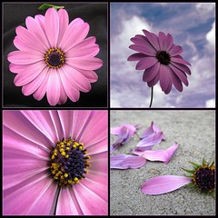 The Life of a Single Flower... (Neelofar_USA) Tags: california pink flowers pakistan arizona sky usa cloud india afghanistan flower color macro cute art love broken nature phoenix beautiful beauty smile clouds canon happy petals bahrain spring perfect pretty dubai peace gloomy purple cloudy awesome muslim islam memories arabic petal gifts arab desi arabia northamerica torn peshawar pakistani lonely kuwait muslims lovely fabulous karachi islamic scattered blooming excellence urdu pashto bloomingflowers phool pukhto platinumphoto