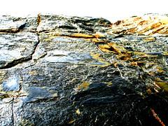 mammothstone (ne0nicecream) Tags: bodegabay winecountry mammothrocks californiashore