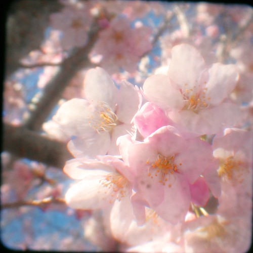 blossoming ttv