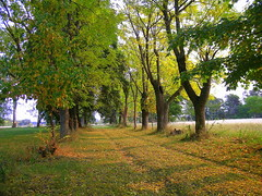 Soleil d'automne por Roselyne S.