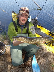 man holding large, freshly caught northern pike