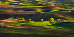 Row of Trees, Palouse (Chip Phillips) Tags: trees light sunset green field horizontal landscape photography golden washington spring butte state northwest wheat phillips hills chip agriculture inland soe rolling palouse steptoe flickrsbest abigfave anawesomeshot rubyphotographer